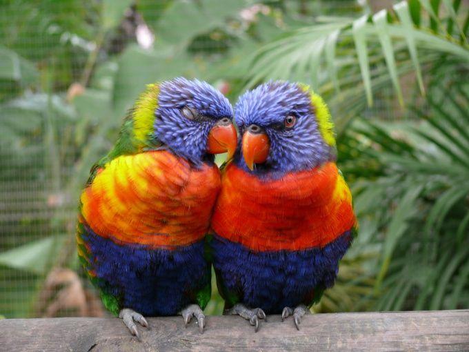 Как сделать домик для попугаев