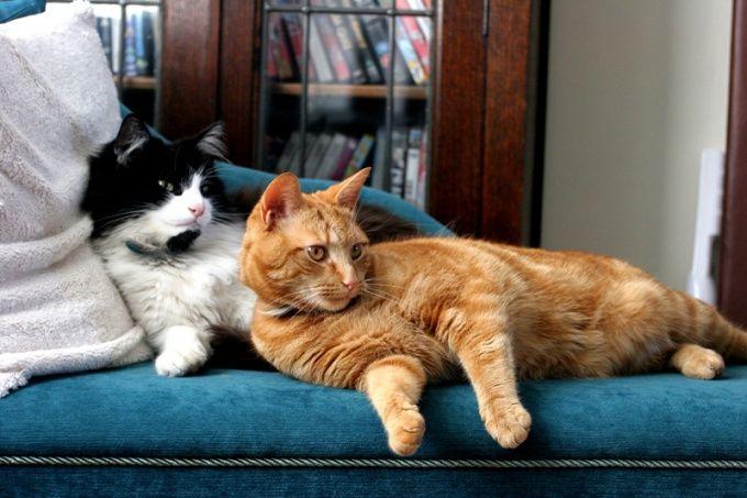 Как развязать кота