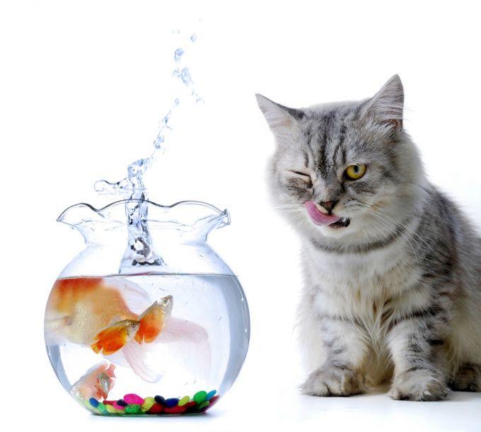 Как сделать самодельный аквариум