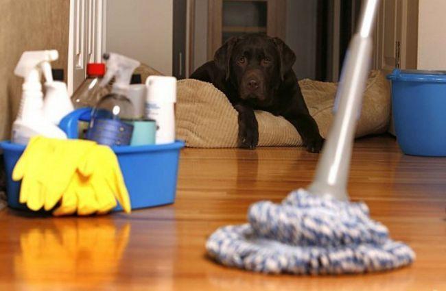 Как сделать дом чистым