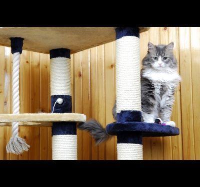 Как сделать дом для кошки своими руками