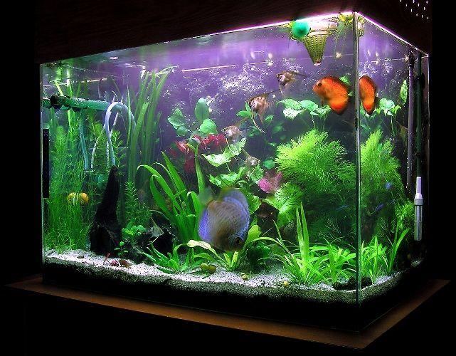 Как сделать компрессор для аквариума