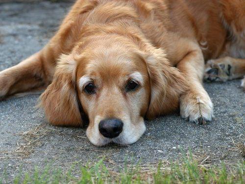 самая простая будка для собаки