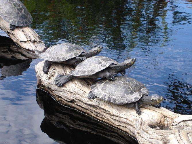 Как сделать островок для черепахи
