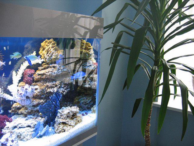 Как собирать фильтр для аквариума
