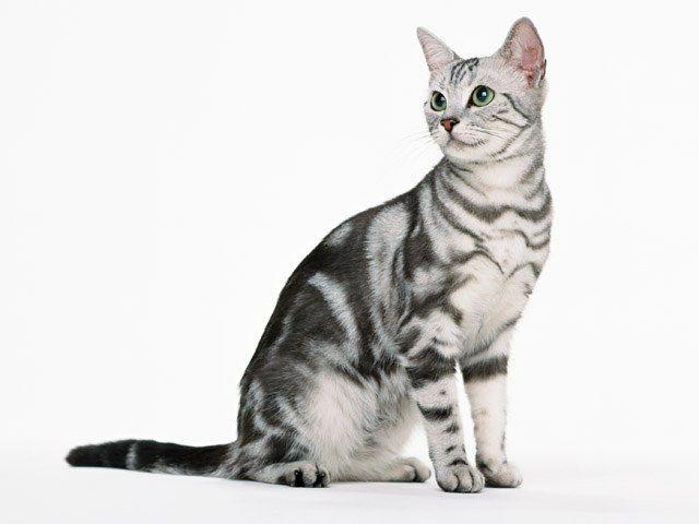 и лесенки для кошек в квартире