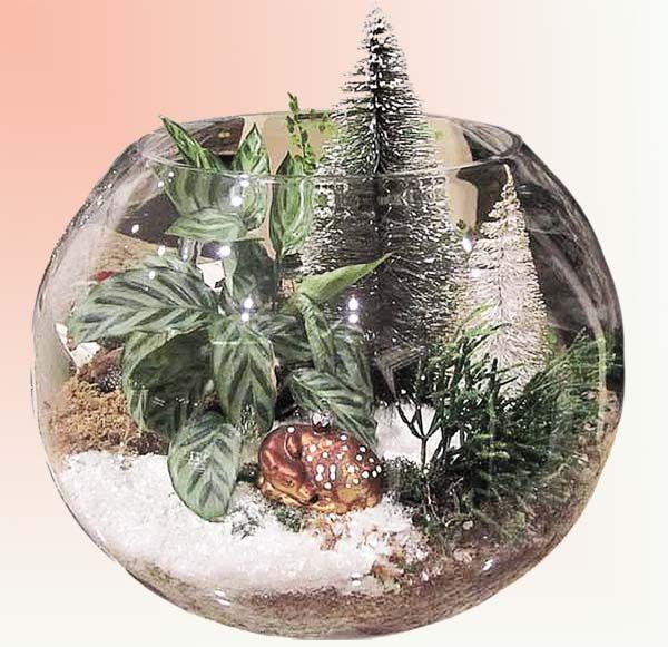 Как создать новогоднюю подарочную композицию из комнатных растений
