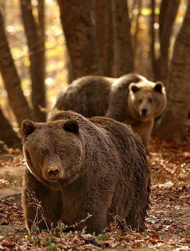 Как спастись от медведя