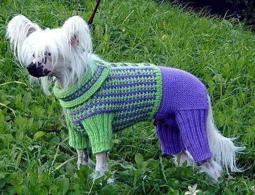 связать комбинезон собаке