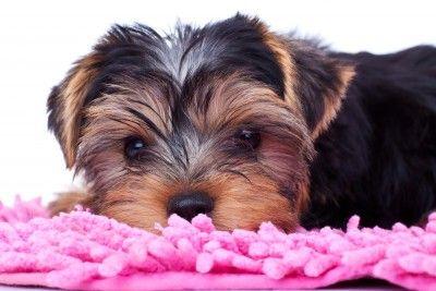 Как сделать лежанку для собаки