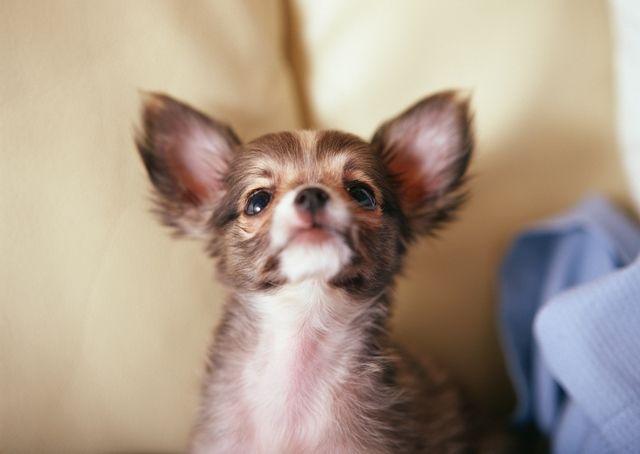Как ставить укол собаке