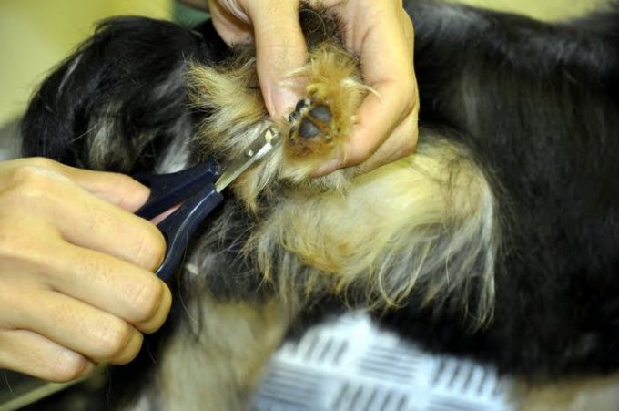 Как стричь когти собакам