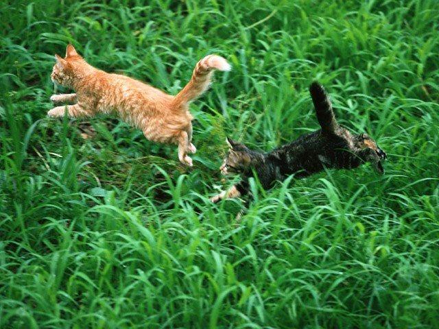познакомить кошек