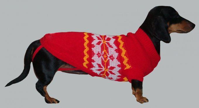 Как связать свитер собаке