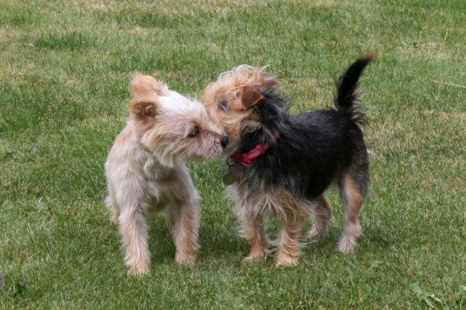 Как вязать собак
