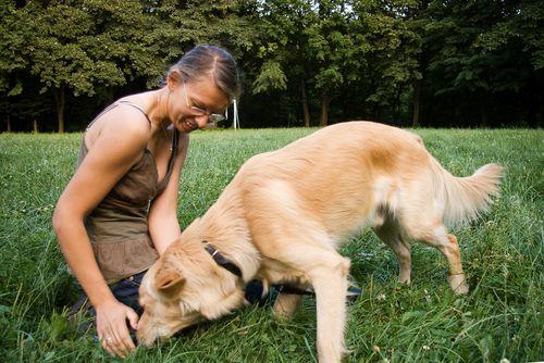Как обучить собаку командам