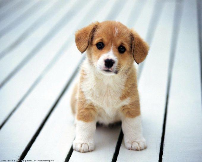 смотреть рассказы как можно заставить маму завести собаку японская хин