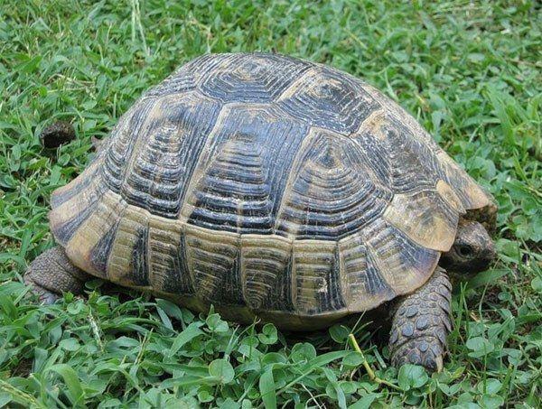 как узнать пол и возвраст черепахи