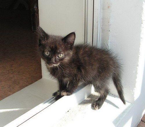 как вылечить понос у кошек