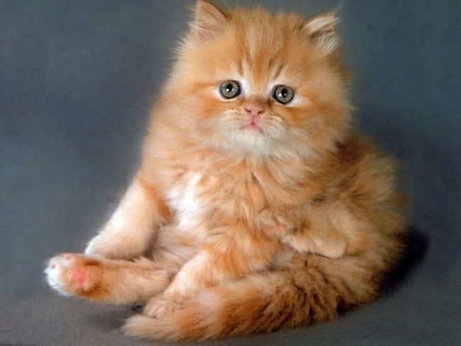 как назвать породистую кошку рождёную в мае