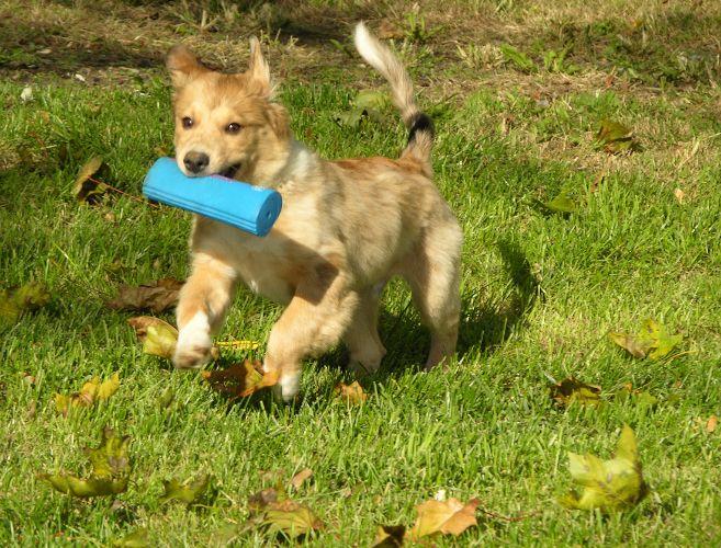 как играть со щенком