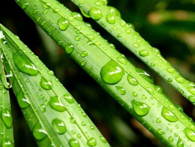 Какие признаки характерны для растений