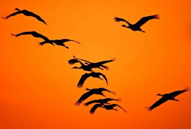 Почему птицы улетают