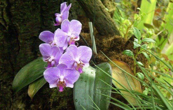 Правила успеха по уходу за орхидеями