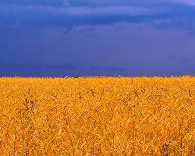 Сколько букв в украинском языке