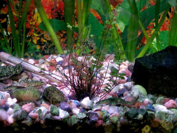 Как чистить аквариумный фильтр