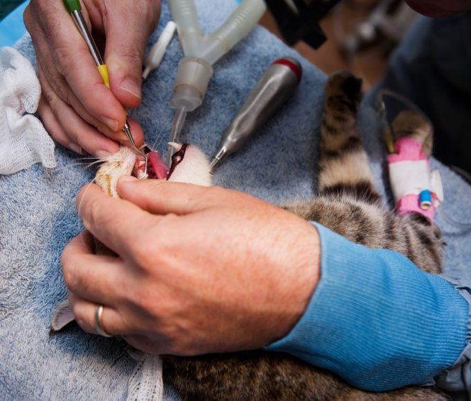 Как почистить кошке зубы