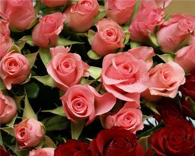 Как хранить срезанные розы