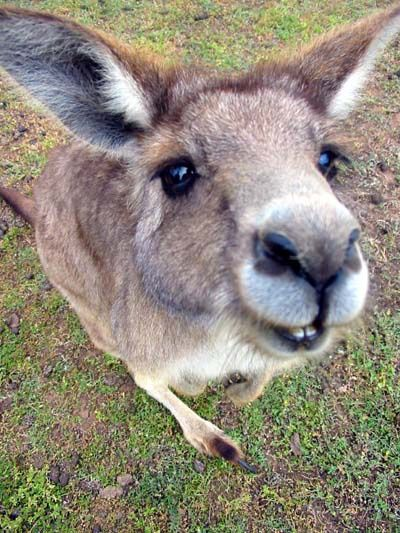 Как попасть в австралию