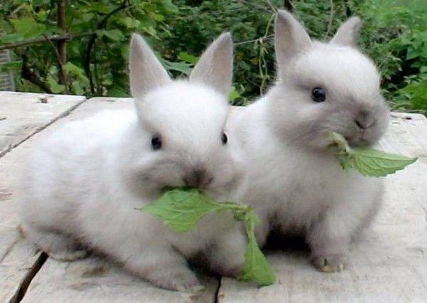 Как кормить кроликов
