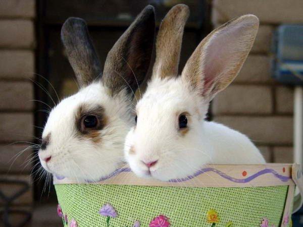 Как лечить насморк у кролика