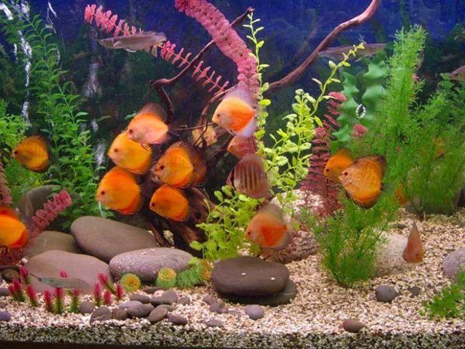 Как лечить рыбок