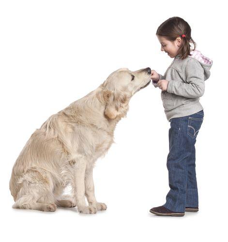 Основная цель обучения пса - не дать ему превратиться в манипулятора