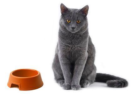 Как отучить кошку от сухого корма