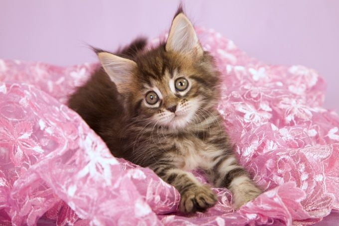 Как отучить котенка царапаться