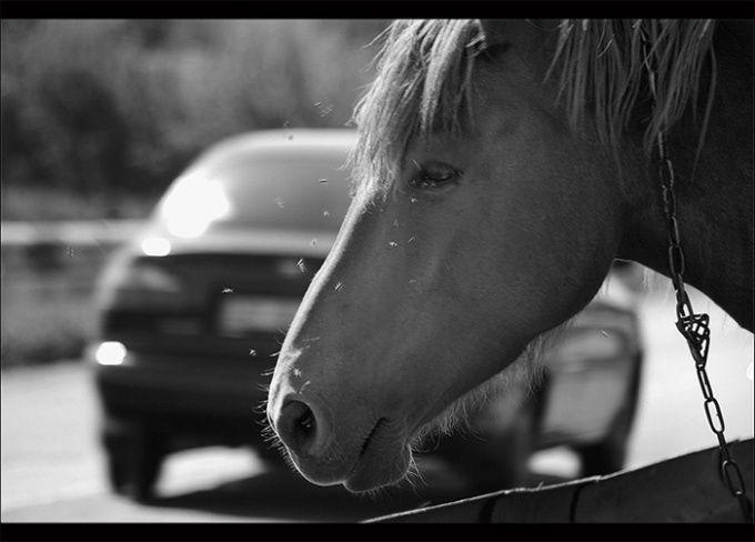 Как перевести лошадиные силы