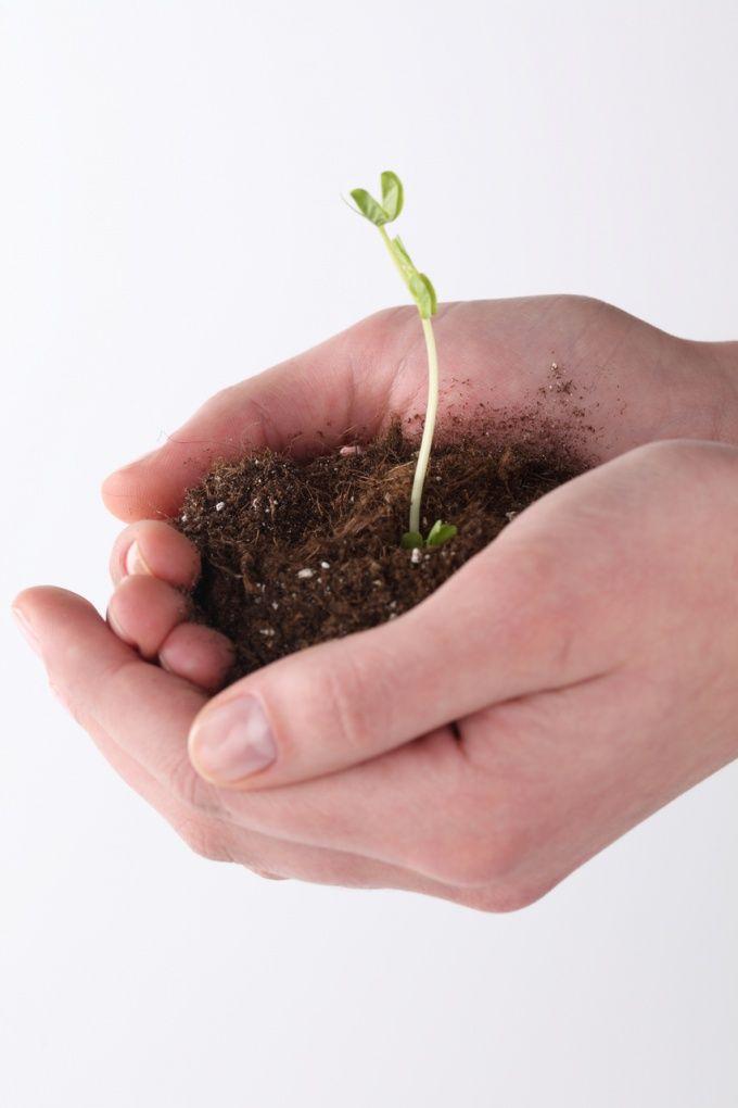 Как получить садовый участок