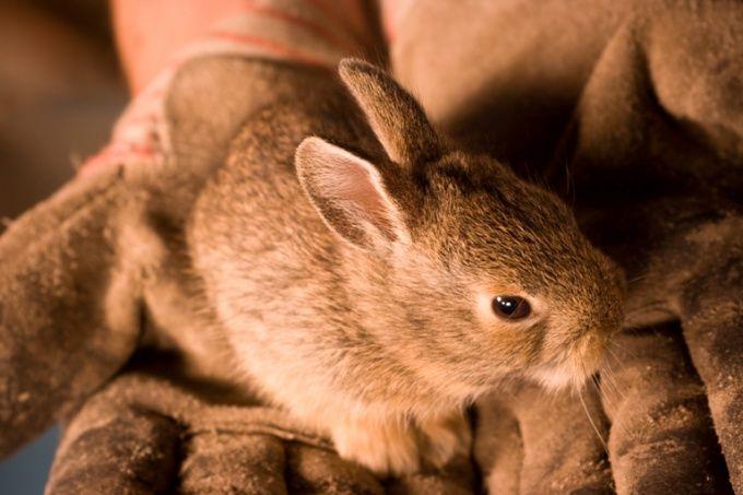 Как сделать домик для кролика
