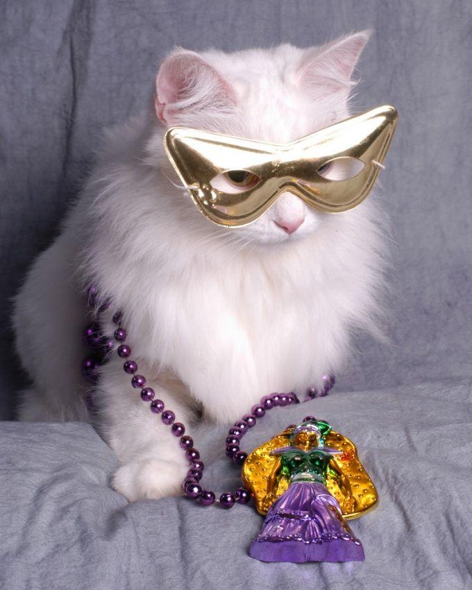 Как сделать костюм кота