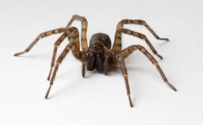 Как сделать паука
