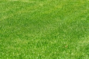 Как украсить двор