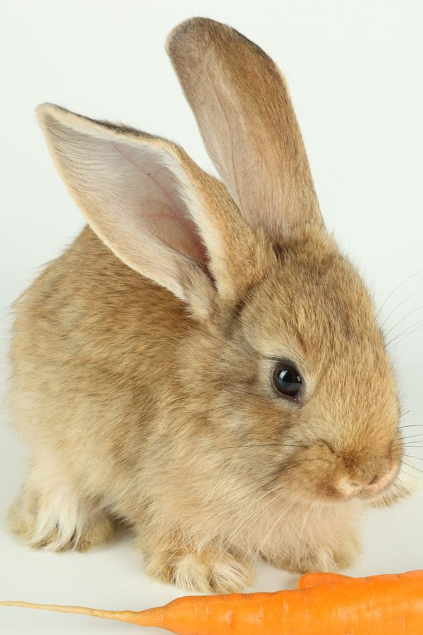 Как выращивать кроликов