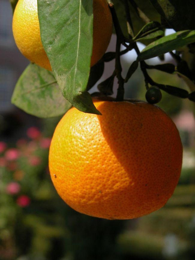 Как вывести пятна от апельсина