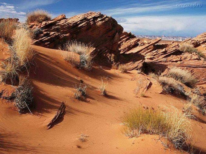 Как выжить в пустыне