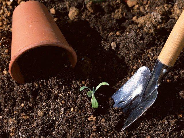 Почему растения пересаживают весной